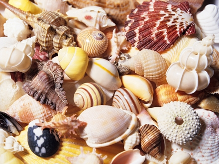 Bột đá có trong mai/vỏ của các loài sò, ốc,...